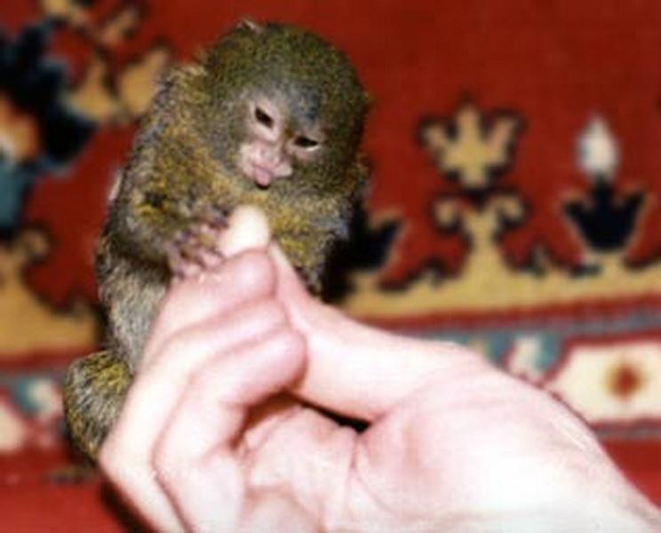 Купить новое экзотическое животное