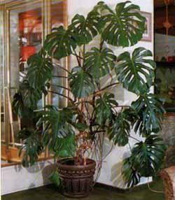 Для здоровья комнатные растения