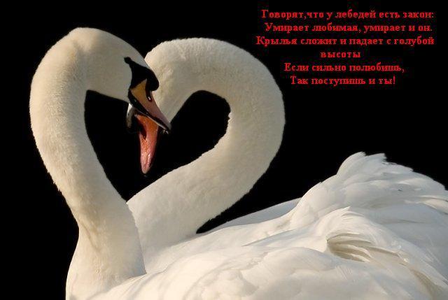 красивые картинки для любимой