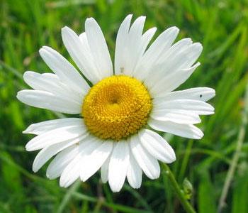 травы при аллергии и экземе