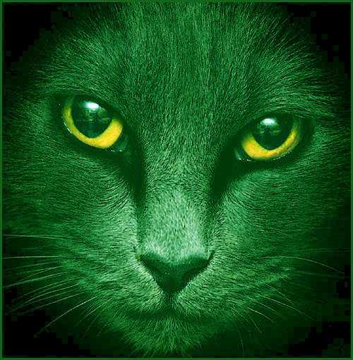 Кот кролик восточный гороскоп