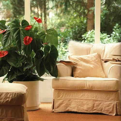 Комнатные растения для радости жизни