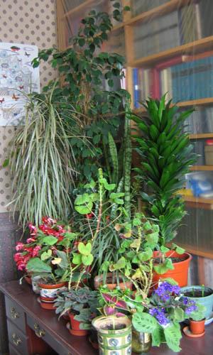 Каталог комнатных растений и цветов для дома, энциклопедия