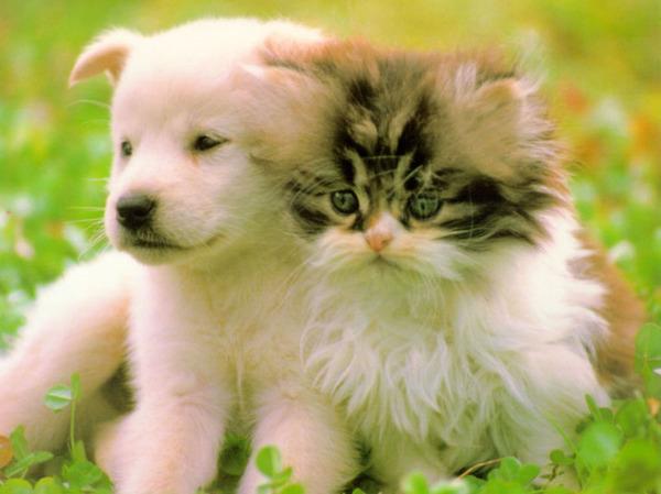 Картинки животных красивые - 1e1