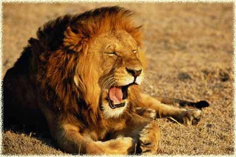 гороскоп для льва про любовь