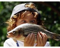 Состав и пищевая ценность рыбы и рыбопродуктов