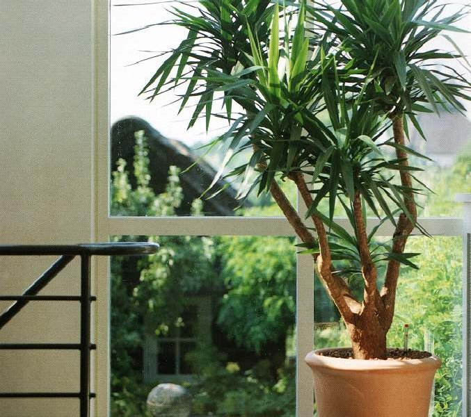 Цветочные вредители комнатных растений фото