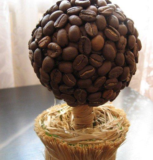 Вырастить кофейное дерево в домашних