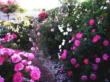 Схема как посадить цветы 36