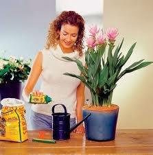 Для комнатных цветов растений