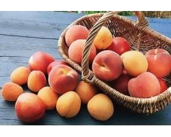 Как цвете персик и абрикоса