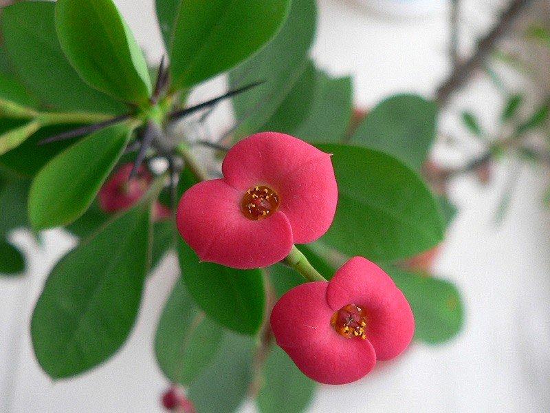 Фото экзотических цветов комнатных