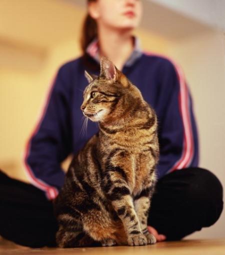 Токсоплазмоз – заболевание мелких домашних животных