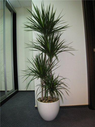 Allwomens - Plantas decorativas de interior ...