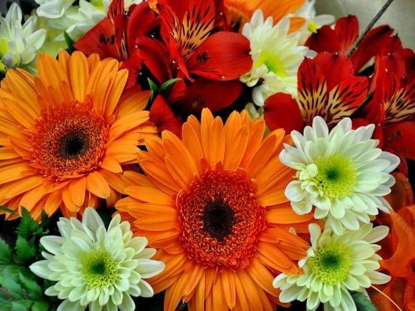 Какие цветы дарить девушке