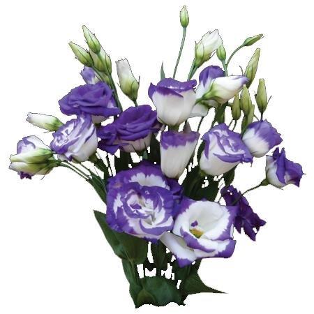 Лизиантус цветы фото