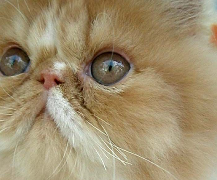 знакомство малышей с котом как