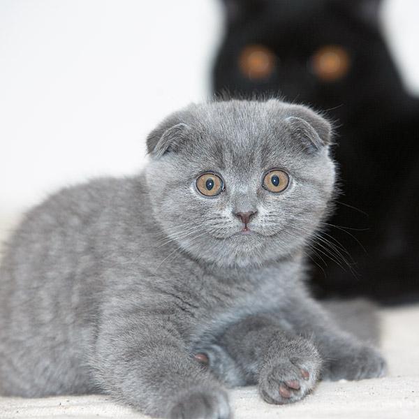 Породы кошек  CATSпортал  catmauru