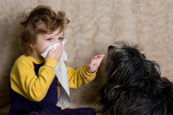 тест на аллергию у собак