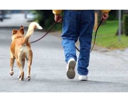 Как отучить собаку от старых хозяев?