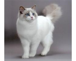 Самые популярные кошки и их характер