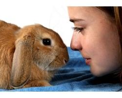 Содержание карликовых кроликов: клетка или свобода?