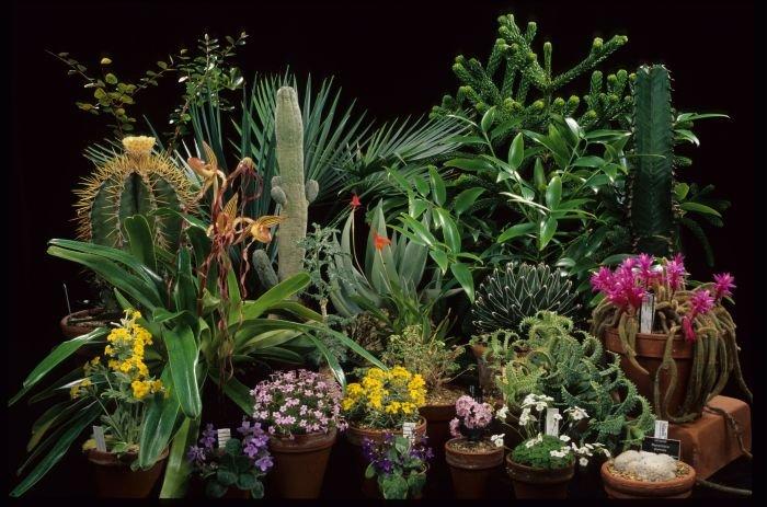 Подходящие водолею растения
