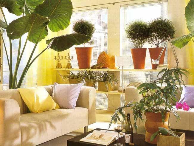 Оформления интерьера комнатными растениями