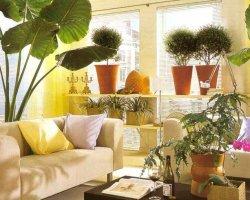 Какие лучше всего завести комнатные растения?