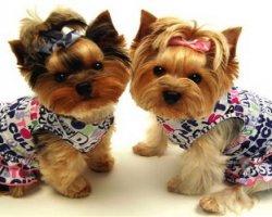 Модный гардеробчик для собак