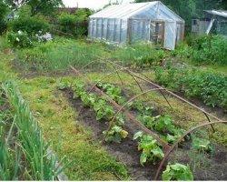 Календарь работ в огороде по сезонам