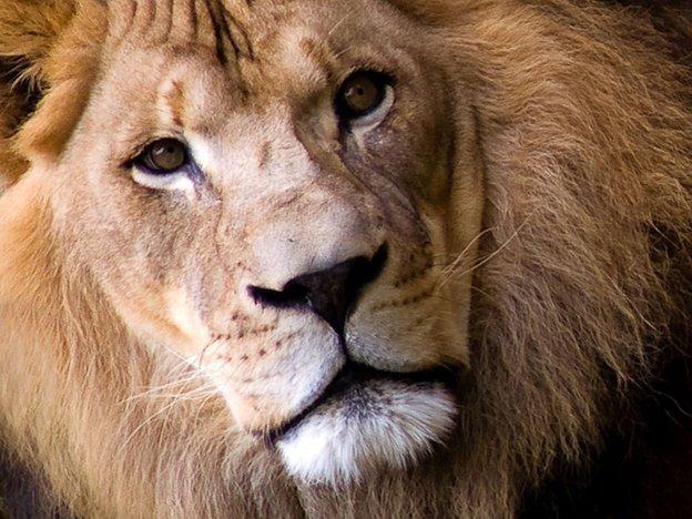 Гороскоп львам любовный 2015