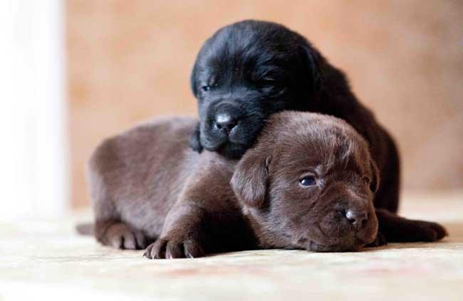 К чему снятся собаки во сне мужчине