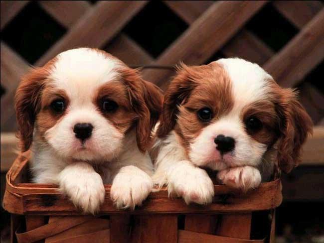 картинки маленьких щенков