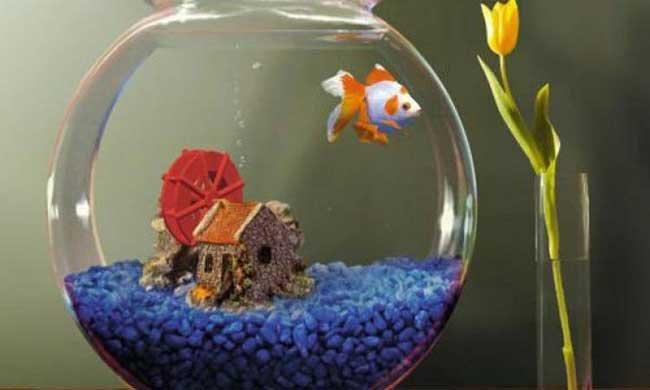 Толкование снов рыбки фото
