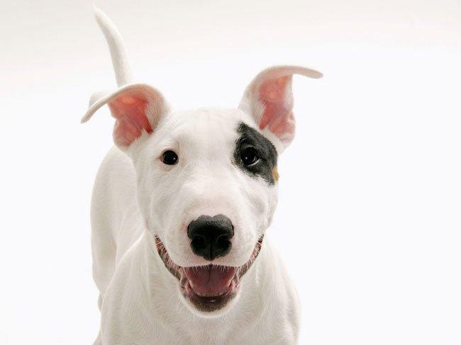 Сонник сбитая собака фото