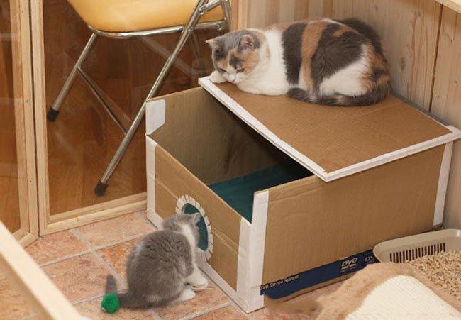 Дом для кота из коробок своими руками