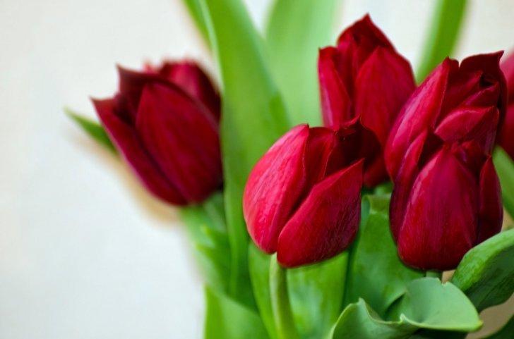 поздравления любимой жене на 8 марта