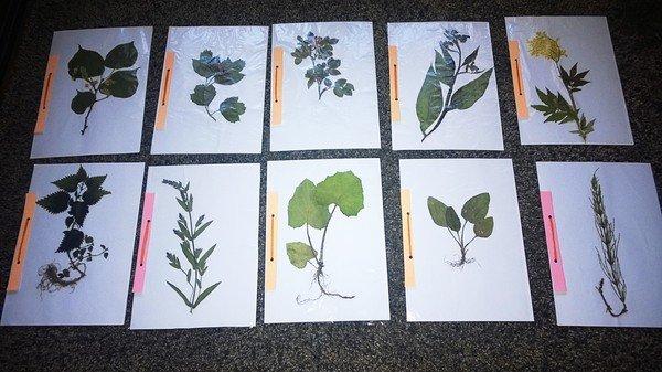 Оформление гербария своими руками для школы