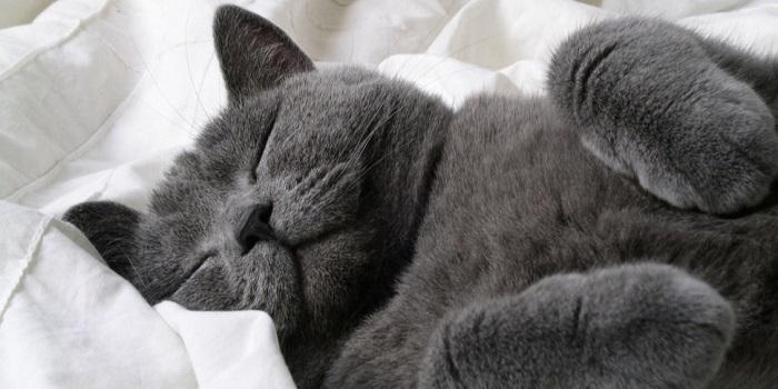 Очень много котов во сне