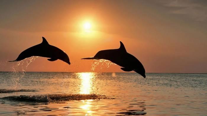 Фото К чему снится дельфин женщине в воде