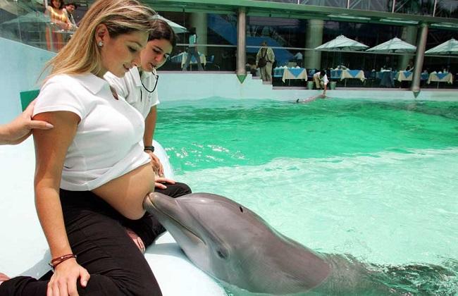 Сонник Дельфин приснился к чему снится во сне Дельфин