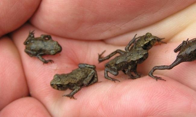 Знакомство С Лягушками И Их Жизнью