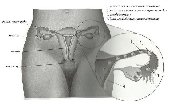 mozhet-bolet-matka-posle-seksa