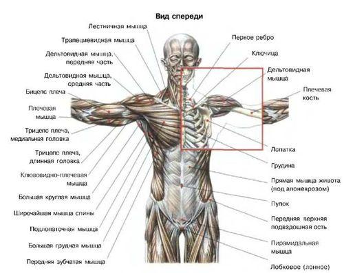 Почему болит правый бок сзади спины
