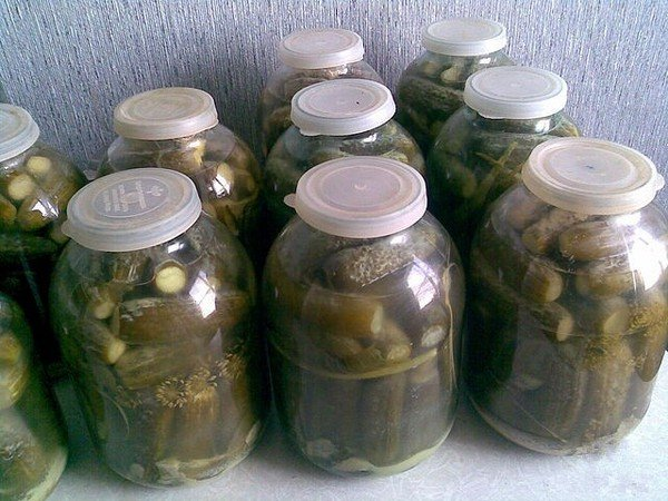 Быстрые соленые огурцы с чесноком и зеленью