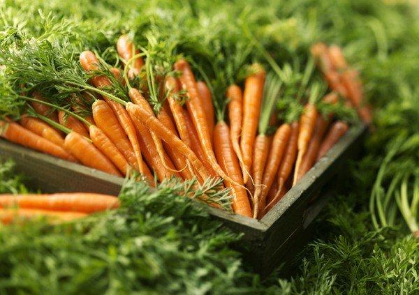 Как сохранить морковь на зиму в домашних условиях