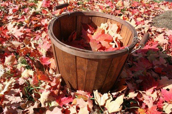 Поделки из листьев для 1 класса своими руками 128
