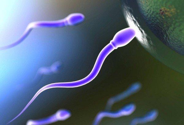 Заниматься сексом во время менструации можно ли забеременеть