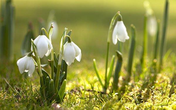 Прикольные картинки о весне со словами
